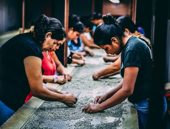 a group of women sort coffee beans in a factory in El Salvador
