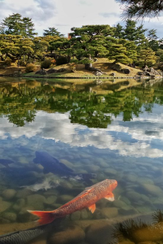 Japanese garden with a pond and a fish