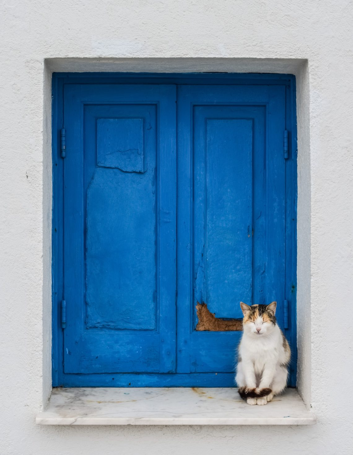 Calico cat sitting in a blue Cypriot window